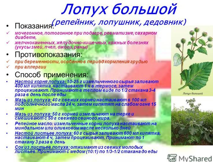 lopuh-bolshoy-pri-podagre