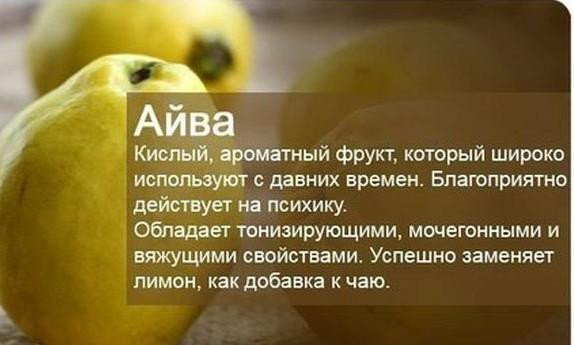 рoleznyie-svoystva-ayvyi