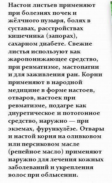 lopuh-bolshoy-lechebnyie-svoystva