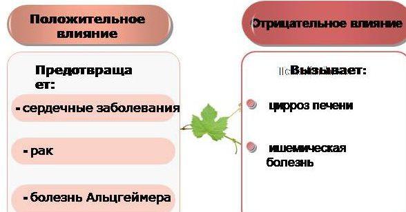 plyusyi-i-minusyi-vina