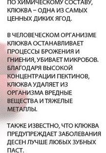 chto-lechit-klyukva