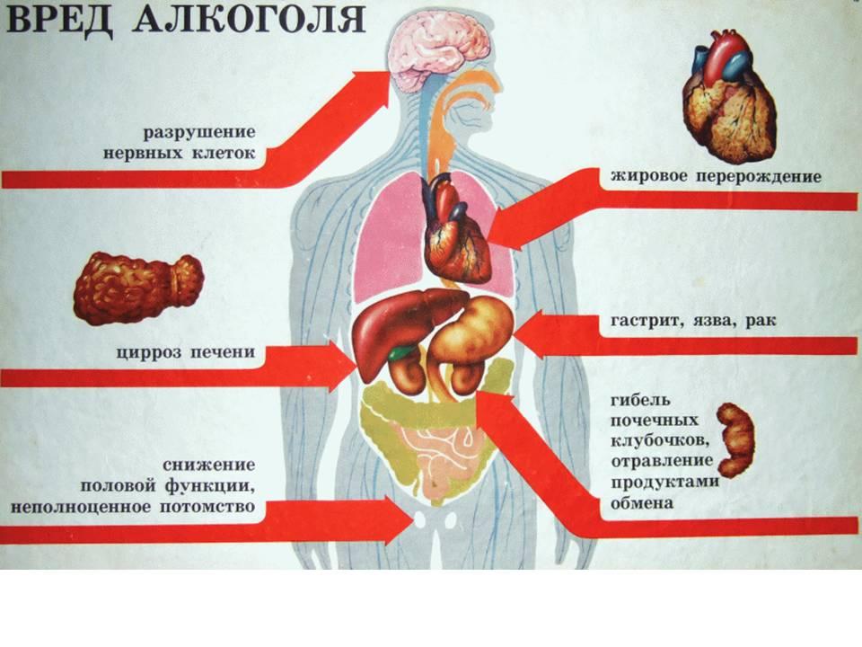 vliyanie-alkogolya-na-organizm