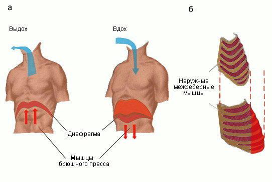 rebernoe-dyihanie