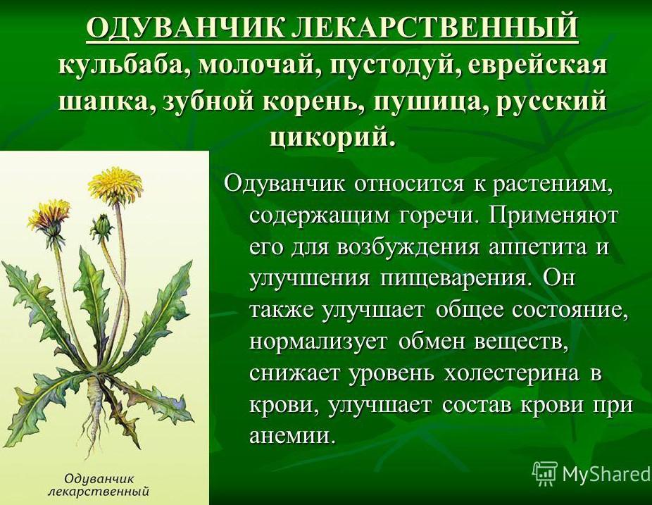 poleznyiy-sok-oduvanchika-lekarstvennogo