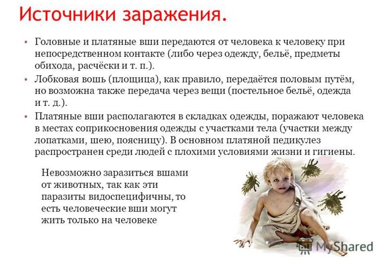 istochniki-zarazheniya-vshami