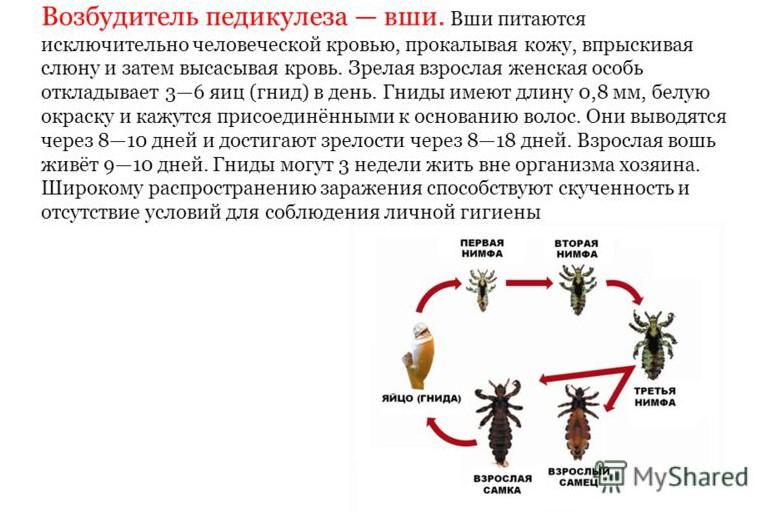 vozbuditel-pedikulyoza-vshi