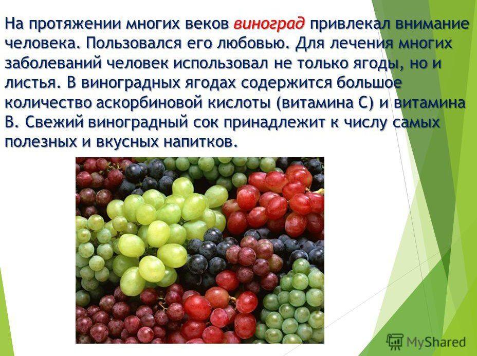 soderzhanie-vitaminov-v-vinograde